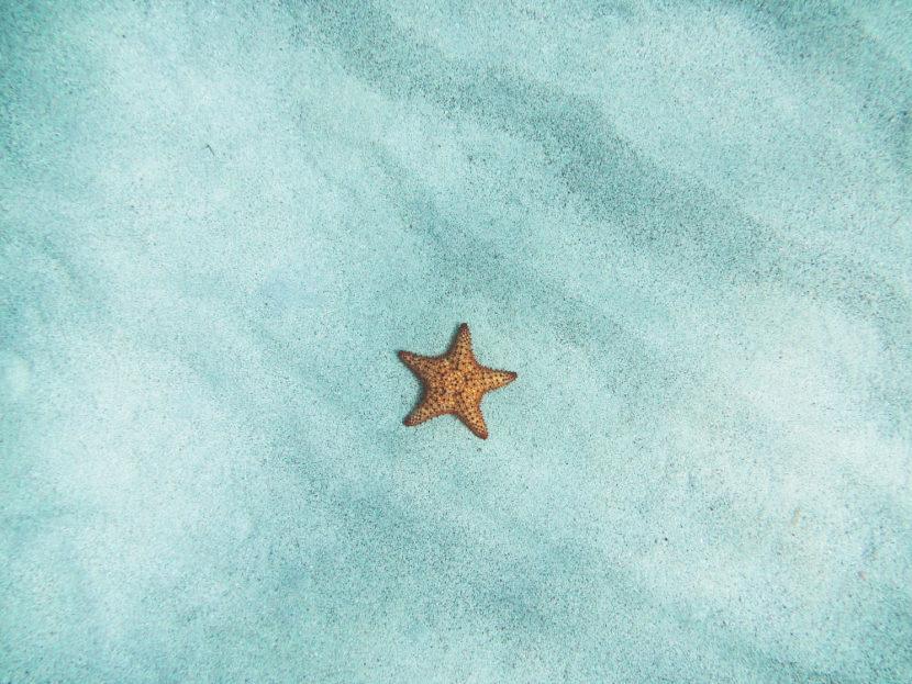 stella_marina